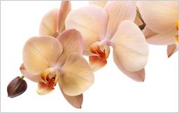 Osmosewasser Pflanzen