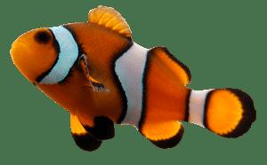 Osmoseanlage Aquarium