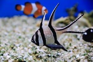Osmosewasser für das Aquarium